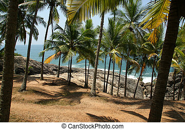 Coconut palms on the ocean shore