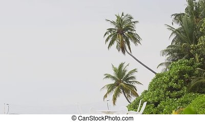 Coconut Palms over a Luxury Resort's Private Beach - Palm...