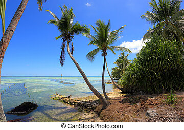 coconut palms over atoll - coconut palms over lagoon on...