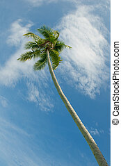 coconut palms over blue sky background