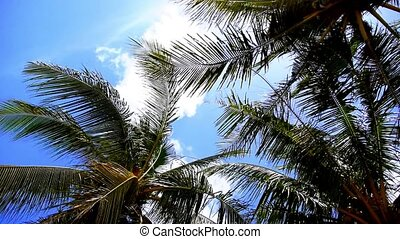 Coconut Palms Swinging in the Wind against Blue Sky. Tropical Background. Speed up.