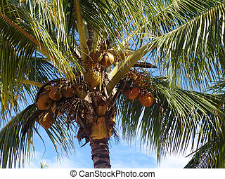 Coconut palmtrees at the beach in Costa Rica