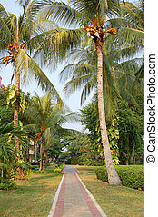 Coconut path