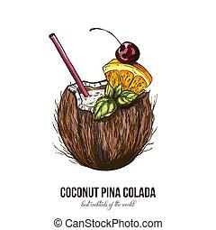 Coconut Pina Colada, vector illustration, colored sketch...