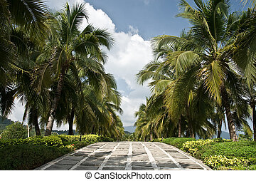 Coconut road