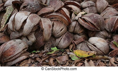 coconut shell background - close up coconut shell background