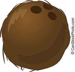 Coconut - Sketch of a coconut. Hand-drawn lineart look ...