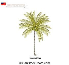 Coconut Tree, A Native Tree of Samoa