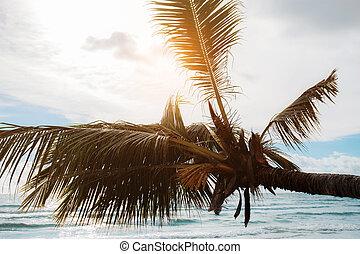 Coconut tree at sea.