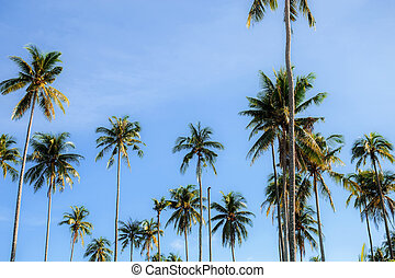 Coconut tree at sky.