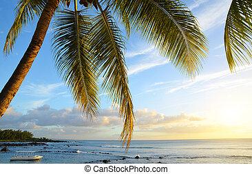 Coconut tree at tropical coast of Mauritius island at sunset.