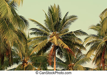 Coconut tree gardens in vintage style