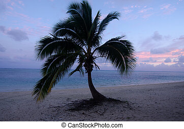 Landscape of coconut palm trees during sunrise in Aitutaki Lagoon Cook Islands