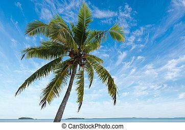 Coconut Tree in Aitutaki Lagoon Cook Islands