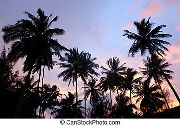 Silhouette of coconut palm trees in Aitutaki Lagoon Cook Islands during sunset.