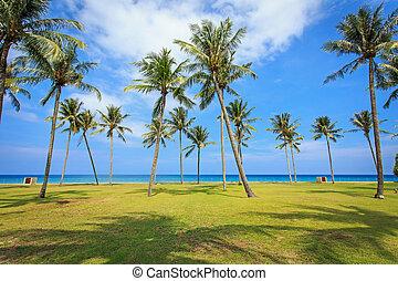 Coconut tree infront the sea