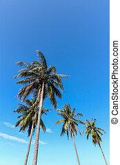 Coconut tree on blue sky background.