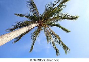 Coconut tree on blue sky