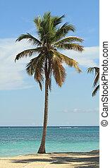 coconut tree on the beach near the ocean