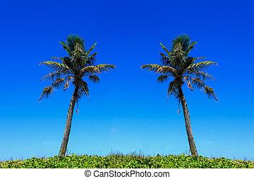 Coconut tree on the beach