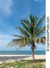 tree on the beach