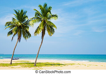 Coconut tree on the sky background