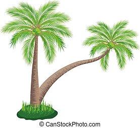 coconut tree on white background vector design