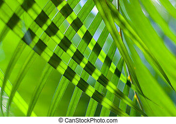 coconut tree palm leaves crossed for natural background or texture with backlit. Sunlight through leaves. Selective focus