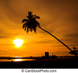 Coconut tree silhouette at sunset