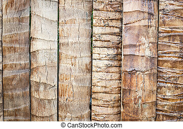 Coconut tree texture