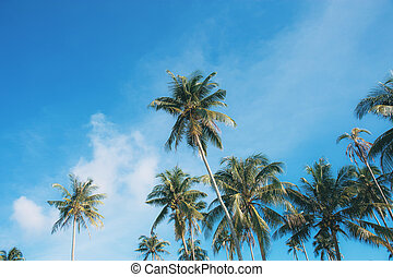 Coconut tree with colorful at sky.
