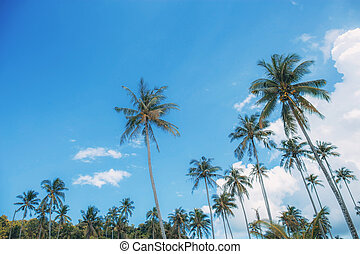 Coconut tree with sky at sea.