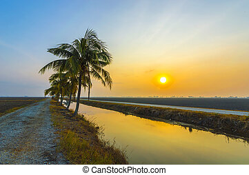Coconut tree with sunrise background at the empty field