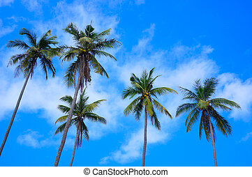 Coconut trees in the blue sunny sky