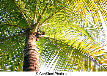 Coconut Trees in the Summer