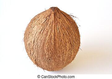 Coconut - Tropical Fruit