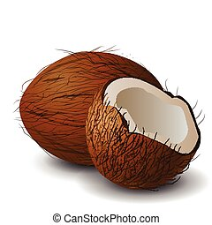Coconut tropical nut fruit