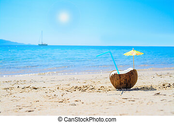 coconut under the sun
