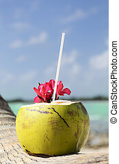 Coconut with drinking straw on a palm tree at the sea