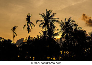 Coconut with The Evening Sun