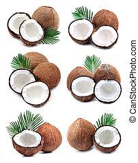 coconuts., 수집