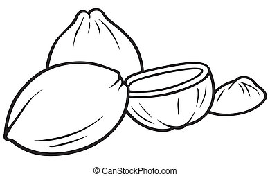 Coconuts - Black and White Cartoon illustration, Vector