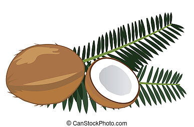coconuts - vector coconuts with leaves