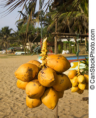 Coconuts hanging on a stand at the beach