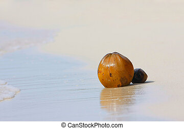 coconuts on sand beach