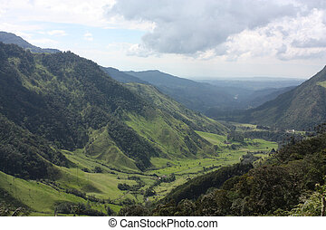 Cocora valley and palm forests