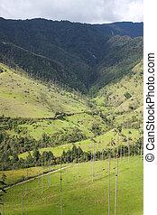 Cocora valley.