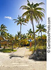 cocos, en, playa tropical, trayectoria, cuba