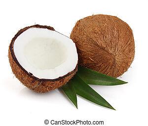 cocos, feuilles