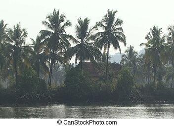 cocos palm river